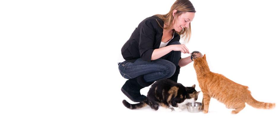 Gaat u op vakantie of een weekendje weg en wilt u uw kat niet alleen thuis laten?